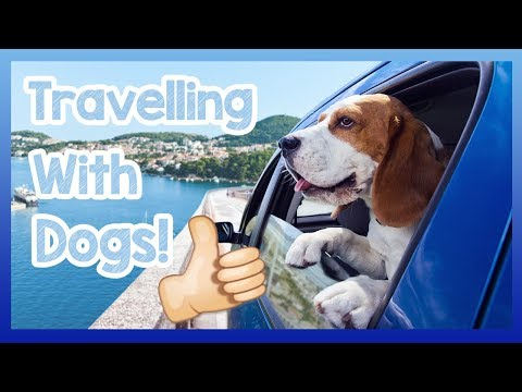 Travelling with a Dog! Tips for How to Travel with a Dog, Precautions for Cars and Public Transport!