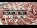 Download  MEAT IN JAPAN⎜PART 1/3⎜WAGYU BEEF⎜FROM FARM TO FORK ⎜TOKYO MP3,3GP,MP4