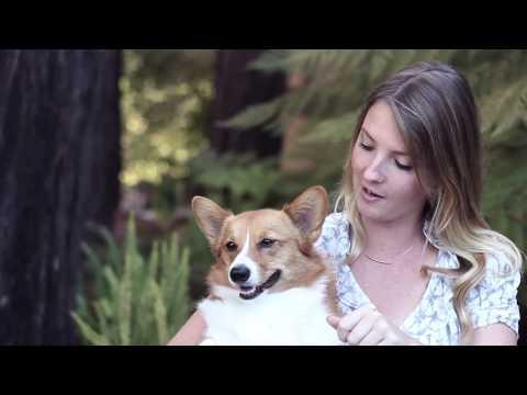 Dog's Bad Breath Remedy - All Natural