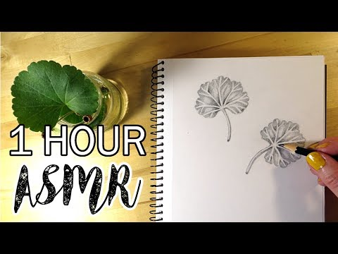 ASMR One Hour of Pencil Drawing - No Talking