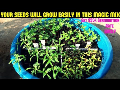 How To Grow Flower Seeds Fast(Get 90-95% Germination Rate Easily With Updates)
