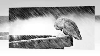ტკივილიანი სიყვარული (ლექსი მერაბ ბერაძის, მუსიკა კოტე მიქაძის, კითხულობს ზაზა იაკაშვილი)