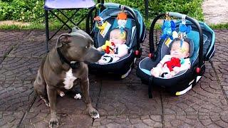 De Perros Protegiendo Bebés #2.!! Los Perros Aman a los Bebés 🐶👶