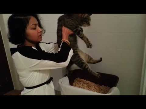 Cat Expressing Bladder