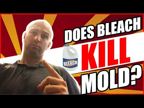 Does Bleach Kill Mold? 🤔 Don't Make This Simple Mistake! (2018)