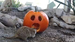 Pumpkin Party at the Toronto Zoo 🎃