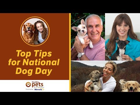 Dr. Becker Interviews Experts on Their Top Tips for National Dog Day