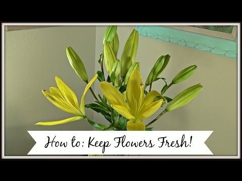 How to Keep Flowers Fresh!