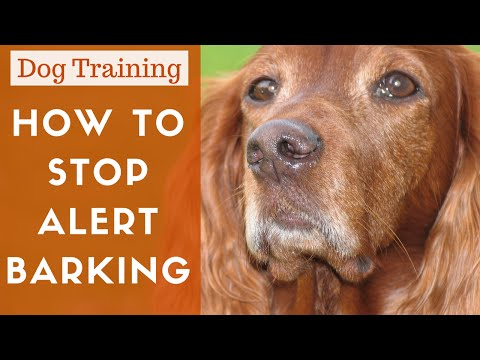 How To Train A Dog To Stop Alert Barking