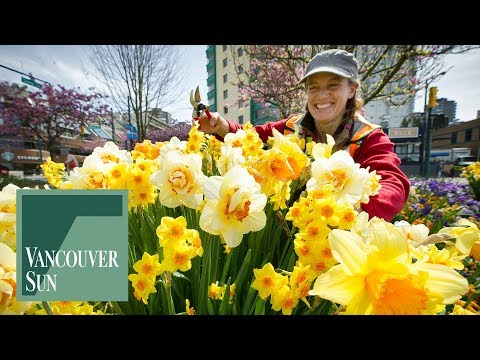 Downtown spring flowers are blooming lovely | Vancouver Sun