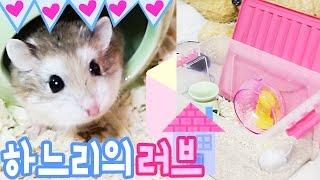[이루리] 햄스터 새 러브 하우스 이사+햄스터 잡는 방법(햄스터 육아일기), Hamster New Love House