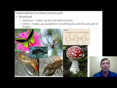 Video 7 Macromolecules