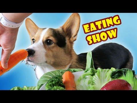 CORGI DOG ANNIHILATES VEGETABLES   MUKBANG ASMR EATING SHOW - Life After College: Ep. 485