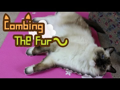 Combing the Fur.