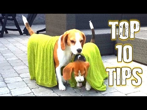 Top 10 Tips : How To Keep Your Dog Cool In The Summer.