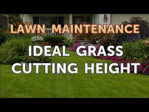Ideal Grass Cutting Height