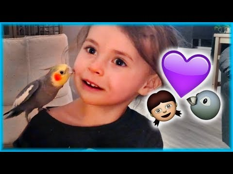 Cockatiel is a Toddler's Best Friend [Violet is basically a Disney Princess]