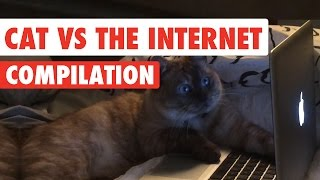 Cats vs The Internet Video Compilation 2017