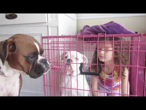 Bad Dogs! (WK 216.6) | Bratayley