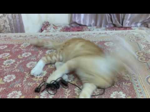 My lost Kitten BLLO