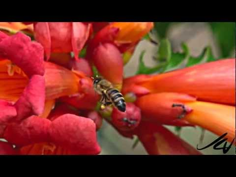 Flowers and honey bees