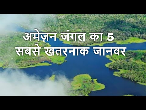 Top 5 DEADLIEST Animal Of The Amazon Forest in Hindi