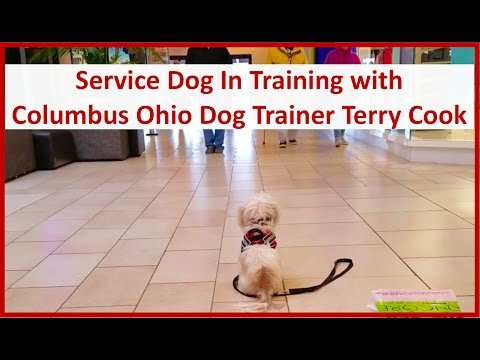 Precious, the Shih Tzu with Columbus Dog Trainer Terry Cook: Public Access Training