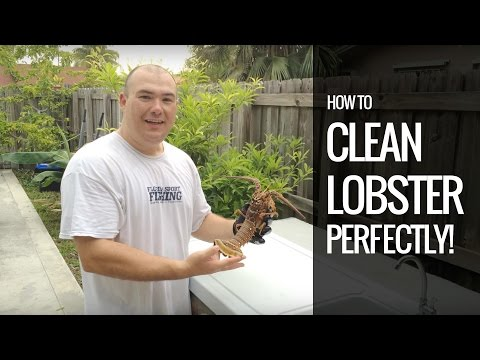 How to clean a Lobster perfectly - Florida Spinny lobster tail - Clean live lobster