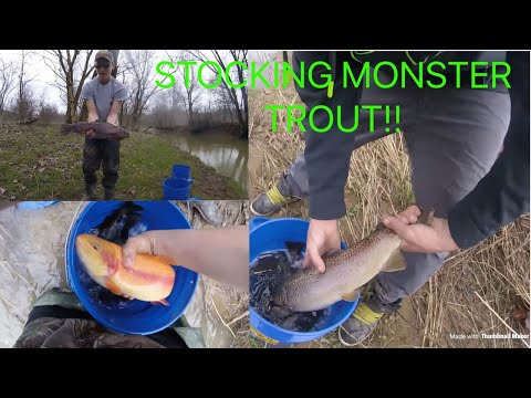 We stocked some monsters!!!!! (2018 PA trout stocking)
