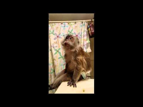 Makeup tutorial for monkey's birthday