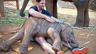 Funny Lap Elephants 🐘 Cute Baby Elephants  [Funny Pets]