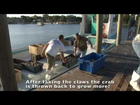 Stone Crab Cooking - Big time!