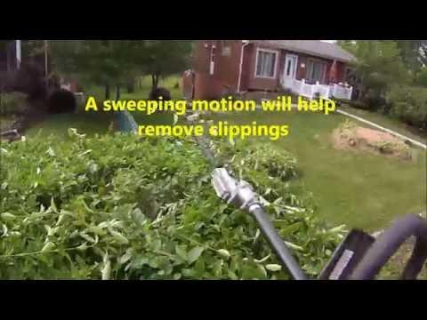 TRIMMING: Privet Hedges
