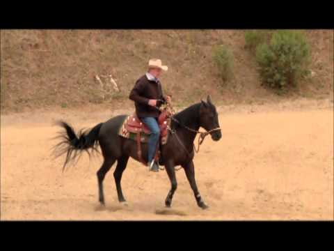 My horse wont back up!  Charles Wilhelm shows how to teach your horse how to back up