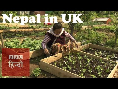Glimpses of Nepal in London (BBC Hindi)