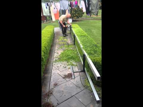 How to prune English Box hedges Maltese style