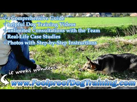 How To Get Neighbors Dogs To Stop Barking - BEST Dog Training