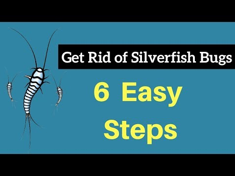 How to Get Rid of Silverfish Bugs Without Professional Help Fast & Permanently