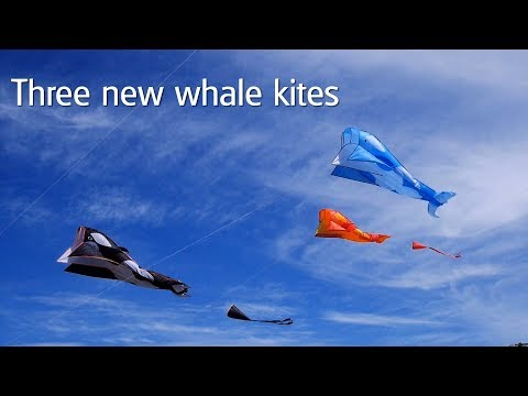 Three new Whale/Dolphin kites