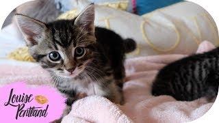 Meet My Kittens!!