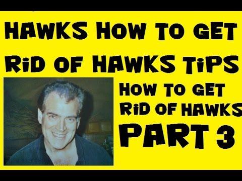 How To Get Rid of Hawks Tips, Bird B Gone Hawk Decoy, Scarecrow, Part 3 of 3
