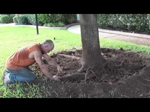 Tree Service Shreveport - Root Pruning and Girdled Roots