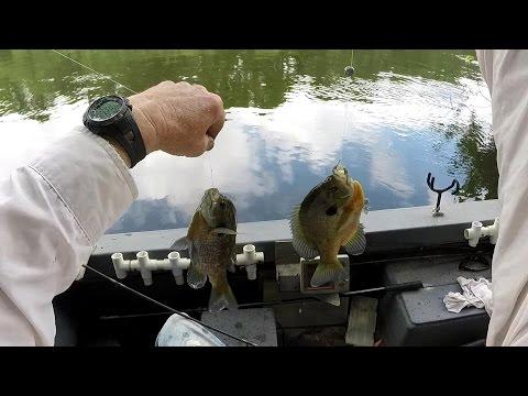Big Bluegills & Catfish! Best River Fishing this Summer!