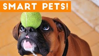 Funniest Smart Pets and Animal Tricks of 2017 Compilation   Funny Pet Videos