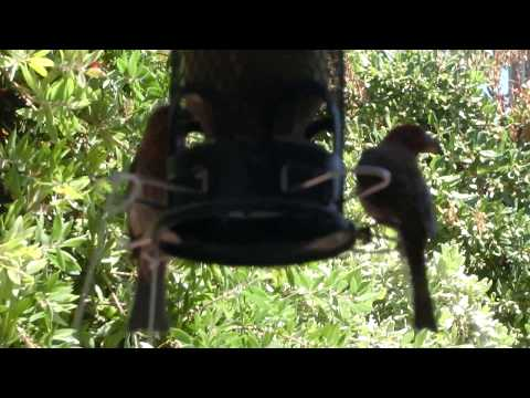 Easy DIY Seeds catcher for Bird feeder -1/2