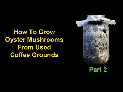 How To Grow Oyster Mushrooms From Used Coffee Grounds - Part 2: Identifying Contamination