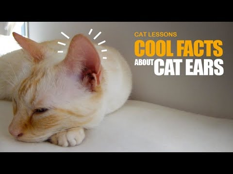 10 Cool Facts About Your Cat's Ears