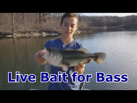 Bass Fishing with Live Bait, Shinners, Minnows - How To Catch - Tips