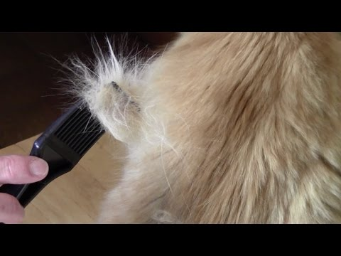 How to Control Shedding of Cats and Dogs with the CoatHook Pet Comb