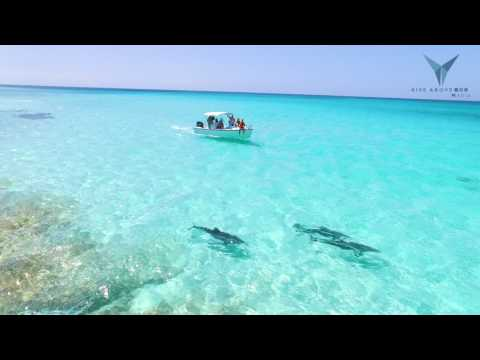 SWIMMING WITH DOLPHINS IN PARADISE | Spanish Wells/Eleuthera, Bahamas